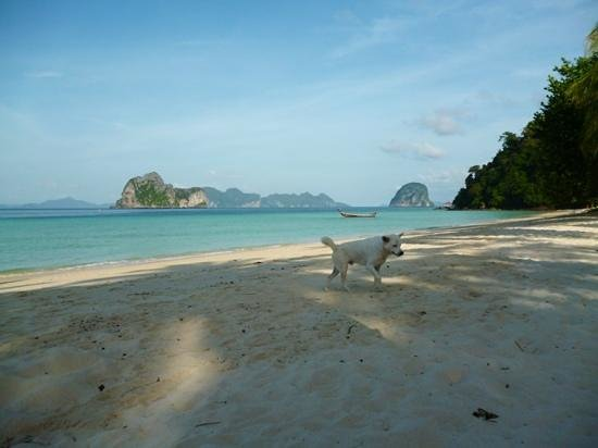 Kohhai Fantasy Resort & Spa: beach and stray dog