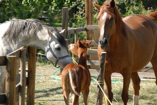 Gressan, إيطاليا: Horses VDA