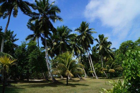 Chalets d'Anse Forbans: Wunderschöne Palmen