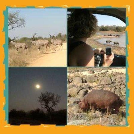 Kruger Flexi Tours - Day Tours: Good times Kruger 2013