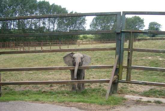 "Canterbury, UK: baby elephant saying ""hello"""