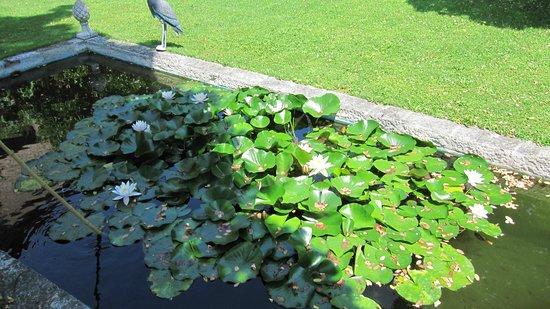 Le Mas du Chanoine: Le bassin à poissons