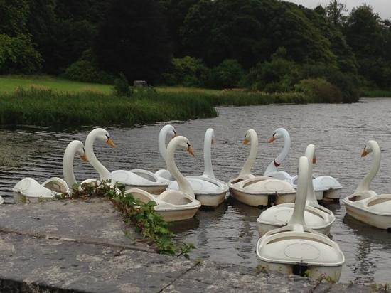 Westport House Camping & Caravan Park: swanboats Westport House