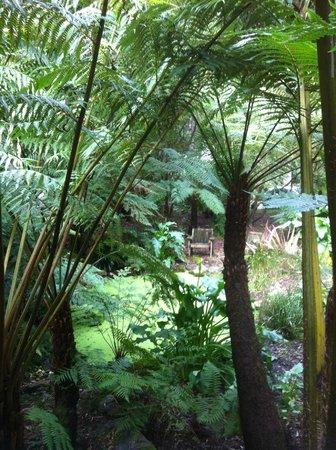 Myers Creek Cascades: Ferns