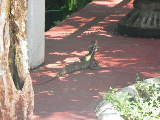 Falls Resort at Manuel Antonio : Otros visitantes del hotel.