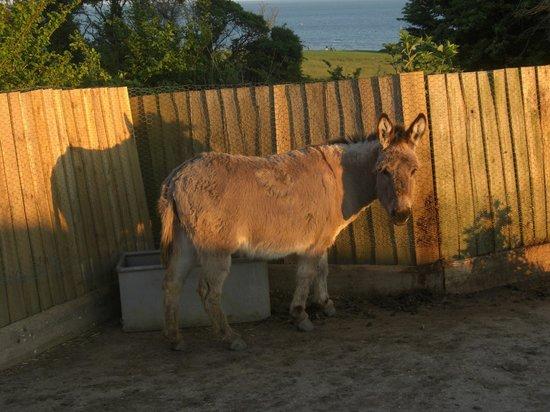 Sandown Manor: Pony