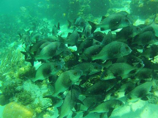 Reserva Marina Hol Chan: Fish Pack 2