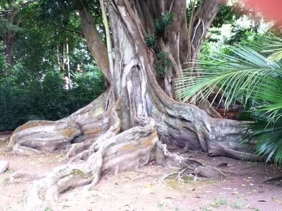 Residencial Casa do Jardim: Jardim