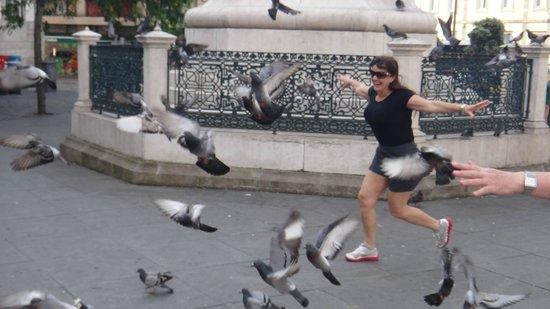 Quality Inn Porto: muuuitos pombos na Praça....