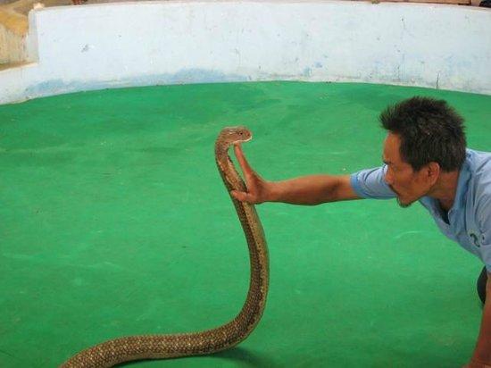 Phuket Cobra Show and Snake Farm: Phuket Cobra Show
