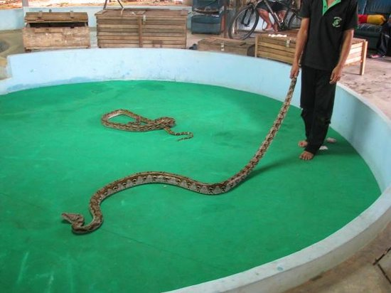 Phuket Cobra Show and Snake Farm: Phuket Cobra Show