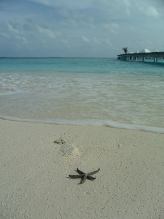 Diamonds Thudufushi: Mare