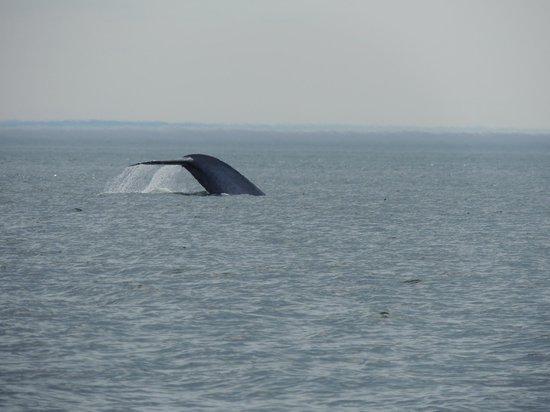 Croisières Neptune : Une queue de baleine bleue