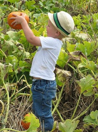 Summers Farm: Ages 2-92 enjoy picking out pumpkins of all shapes and sizes