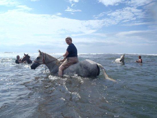 Barking Horse Farm: riding in the ocean!