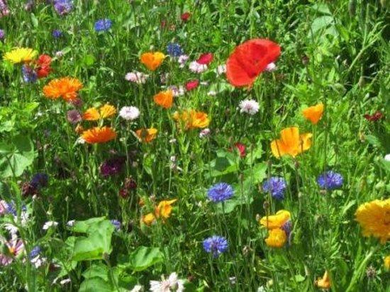 Kendal, UK : Flowers in the kitchen garden