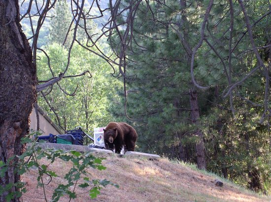 Bear Picture Of Yosemite Lakes Rv Resort Groveland