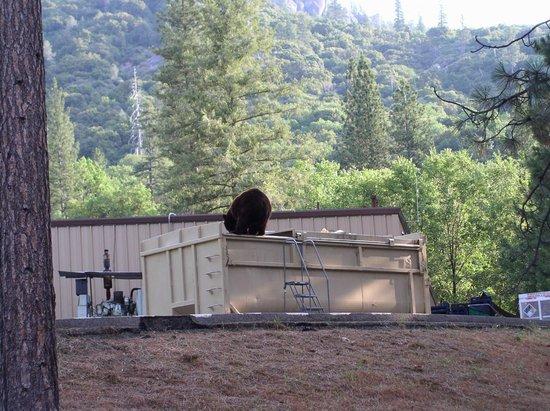 Yosemite Lakes RV Resort: Bear