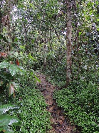 Reserva Biologica Indio Maiz