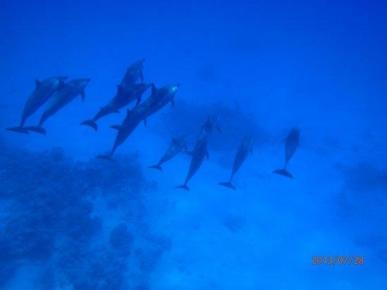 Dolphin House Reef (Sha'ab Samadai) : Graceful symmetry