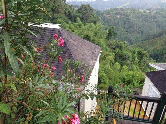 Strawberry Hill : breathtaking memories