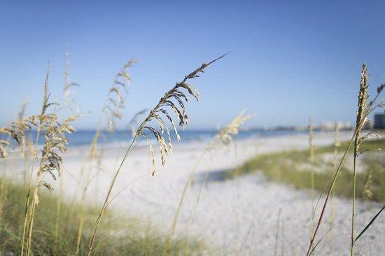 Hyatt Residence Club Sarasota, Siesta Key Beach: Morning sunrise