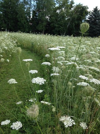 Butterfly Gardens of Wisconsin : trails and Queen Anne's Lace