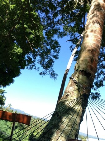 Nakia Resort & Dive : View from hammock