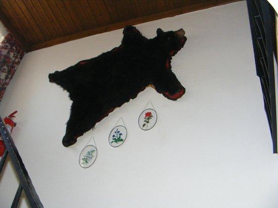 Gasthof Moarwirt: Bear skin on stairwell wall