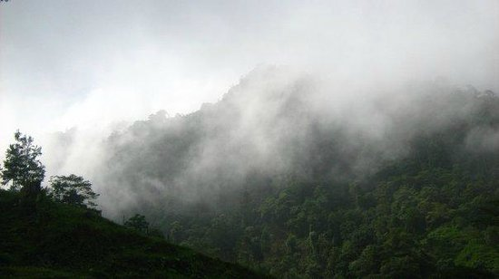 San Pedro Sula, Honduras: Mist over the mountains at Cusuco National Park