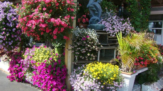 Aquarius: Beautiful Flower Gardens