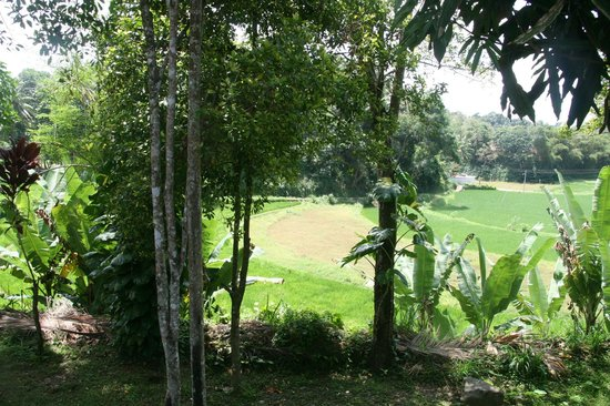 The Mansion: Lovely paddy field view