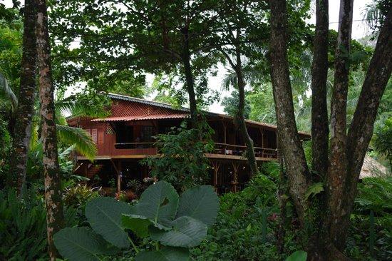 Hotel Banana Azul: l'hotel vu de la plage avec son jardin tropical