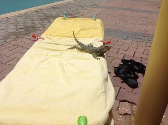 La Quinta Beach Resort : i need more sun cream