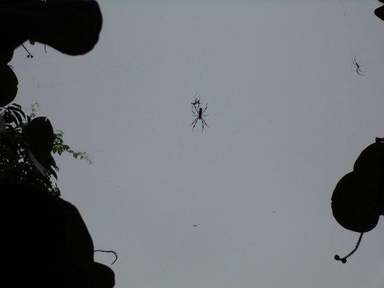 John D. MacArthur Beach State Park: Scary spider