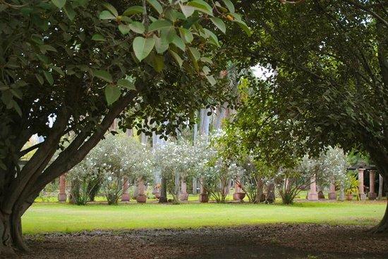 Jardin Botanico Benjamin F. Johnston: Pérgola