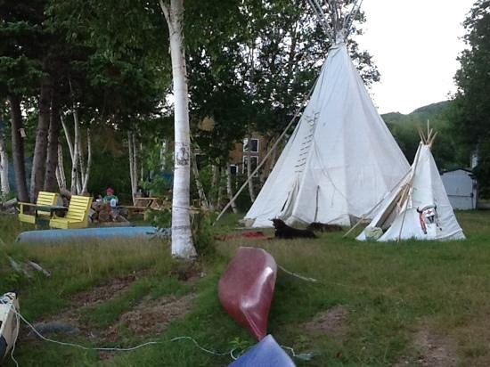 Cabot Shores Wilderness Resort : Our happy and exhausted dogs relaxing outside the Tipi