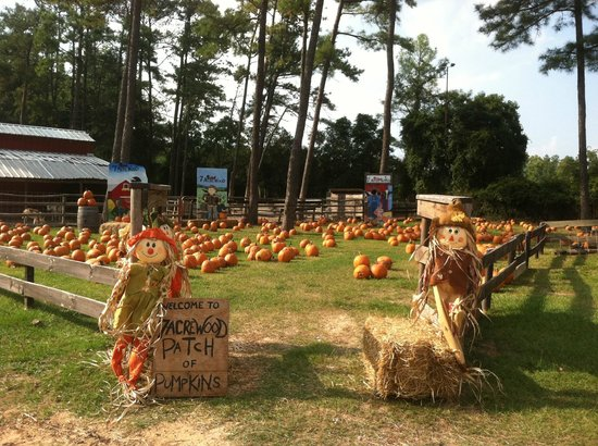 7 Acre Wood: October Pumpkin Patch