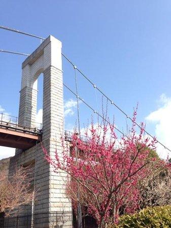 Tadano Togawa park: 風の吊橋