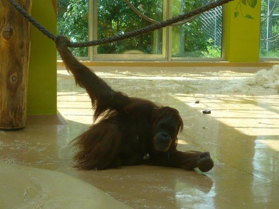 gorilla foto di tierpark hellabrunn monaco di baviera tripadvisor. Black Bedroom Furniture Sets. Home Design Ideas