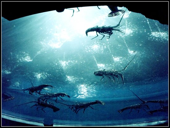 N Picture Of Greater Cleveland Aquarium Cleveland