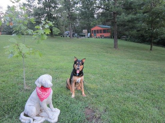 Rim Rock's Dogwood Cabins: Zeus visiting Oakley