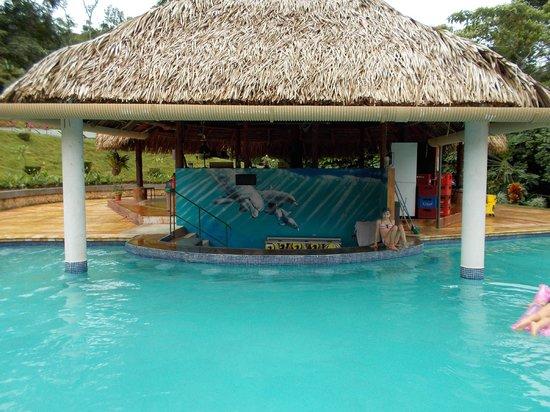 Osa Mountain Rainforest Villas & Adventures: Pool and Toucan Tilly's bar