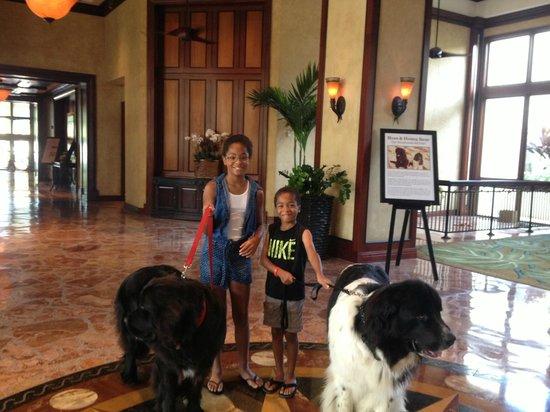 Hyatt Regency Coconut Point Resort and Spa: Honeybear and Hoss
