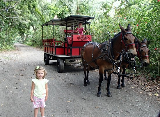 Waipi'o Valley Wagon Tours: Our mule wagon with Tracie