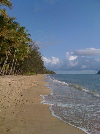Palm Cove Beach : Beautiful Palm Cove