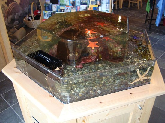 Queen Charlotte Visitor Centre : Salt Water Touch Tank Aquarium!