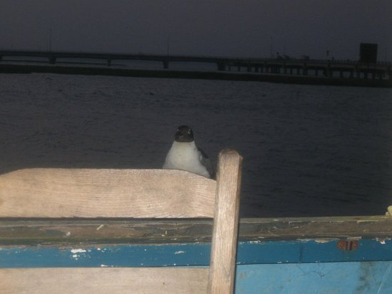 P.T. Pelican's Intercoastal Deck Bar: he kept us ladies company during our meal!