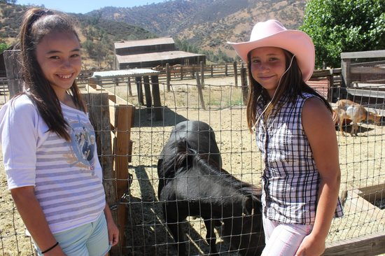 Rankin Ranch: Feeding the animals