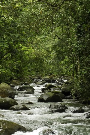 Chachagua Rainforest Eco Lodge: River running through the property